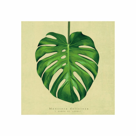 Καμβάς Chic Mic Monstera 20x20cm - CNV015